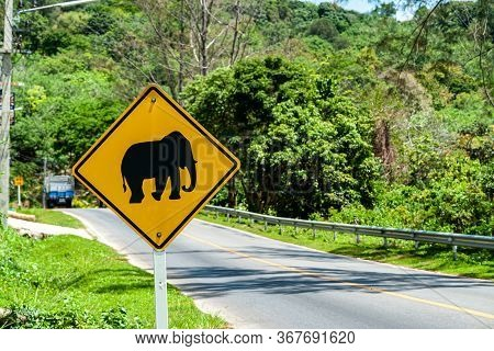 One Road Signs Elephant Crossing Warning. Orange Rhomboid Icon Road About Elephants Traffic. Beware
