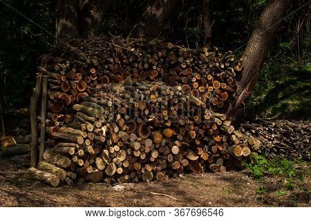 Preparation Of Firewood For The Winter. Firewood Background, Stacks Of Firewood In The Forest.