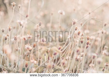 Solf Focus Fairy Tale Wild Grass Field Landscape With Spikes. Rural Scene. Nature Concept. Blurred S