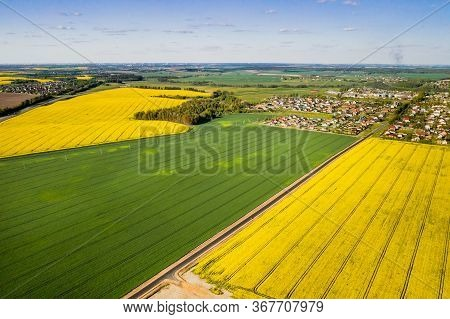 Top View Of The Yellow Rapeseed Field And The Village. A Sown Field Of Rapeseed In Belarus.the Villa