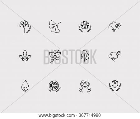 Plants Icons Set. Tulip And Plants Icons With Yew Tree, Carnation And Hornbeam. Set Of Fruit For Web