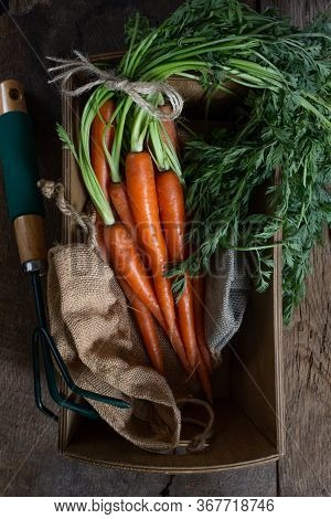 Fresh Organic Carrots In A Box With Canvas, Garden Tool Hoe On Antique Wooden Table. Rustic Kitchen