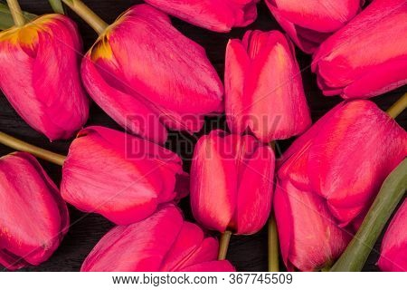 Background Of Fresh Spring Tulips Flowers, Close Up. The Concept Of Women's Day, Mother's Day, Birth