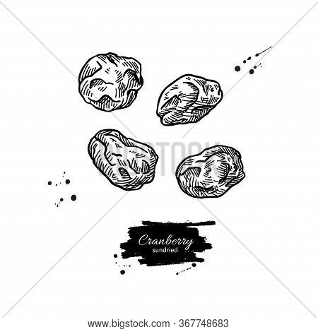 Dried Cranberry Vector Drawing. Hand Drawn Dehydrated Berry. Dry Fruit Illustration.