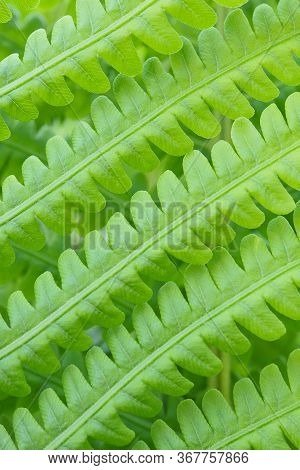 Foliage Fern. Stalks And Leaves. Light Green Patterned Wallpaper. Vertical Natural Background With A