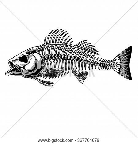 Bass Fish Skeleton Monochrome Concept In Vintage Style Isolated Vector Illustration