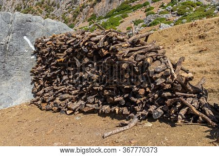 Pile Dry Firewood In The Mountains. Heap Of Brushwood On Ground. Preparation Of Kindling For Bonfire