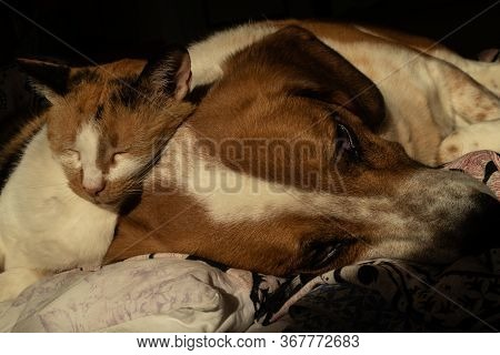 Cute Dog And Cat Are Chilling Together In Bed