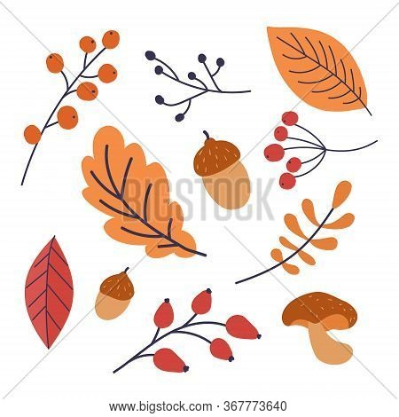 Autumn Leaf Symbol. Hand Drawn Vector Autumn Leaf. Design For Poster, Kitchen Textiles, Clothing And