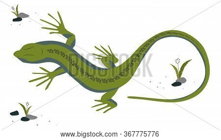 Green Lizard Vector Illustration. Reptile With Long Body And Tail, Four Legs And Green Skin. Design
