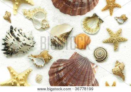 Cluster Of Seashells On White Sand