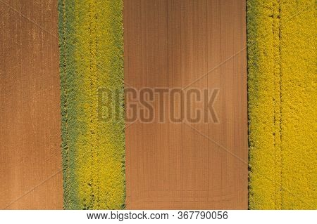 Top View Of Blooming Oilseed Rape Field From Drone Pov, Aerial View Of Blossoming Rapeseed Plantatio