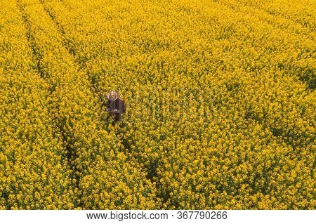 Aerial View Of Oilseed Rape Farmer Using Drone Remote Controller On Blooming Rapeseed Canola Plantat