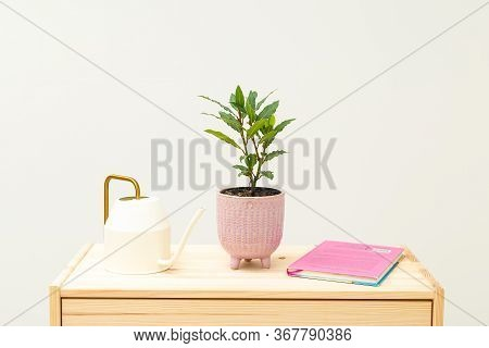 Bay Leaf Plants And Books On Wooden Shelf. Plant Home Decoration. Life Style