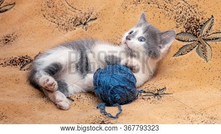 A Small Kitten Lies On The Couch And Plays With A Skein Of Thread
