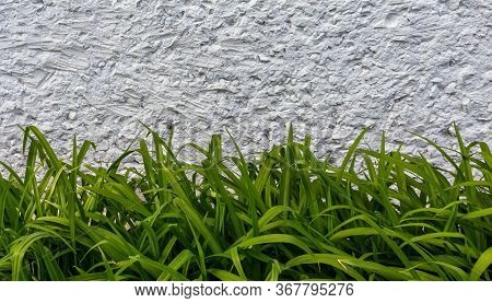 Abstract Background Of Day Lilly Green Leaves And White Concrete