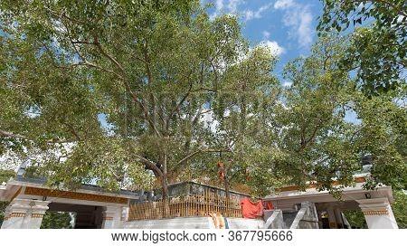 Sri Lanka Famous Place Jaya Sri Maha Bodhi Is A Sacred Fig Tree In The Mahamewna Gardens, Anuradhapu