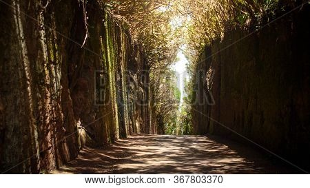 Long Narrow Pathway Or Tunnel Between High Cliff In The Forest. Pico Del Ingles, Tenerife, Spain