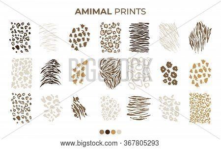 Tiger Prints Patterns, Safari Animals Skin Of Leopard, Jaguar And Zebra, Vector Texture Decoration E