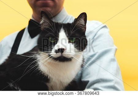 Partial View Of Man Holding Cute Black And White Taxedo Cat With Green Eyes And Whisker On Yellow Ba