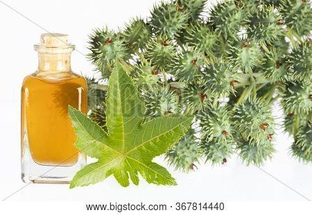 Castor Oil Bottle With Castor Fruits, Seeds And Leaf - Ricinus Communis