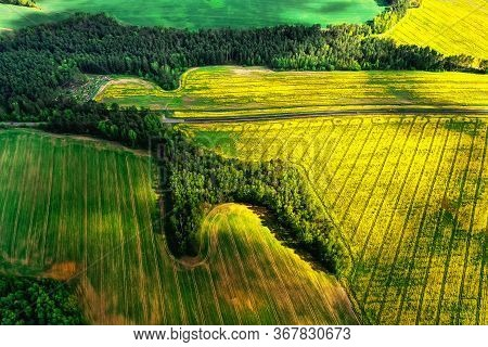 Aerial View Of Rape Field From Above. Farming. Summer Nature Background. Agriculture On Field. Yello