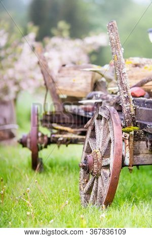 Old Wooden Wagon With Rusty Wheels On The Grass In Spring. Close View.
