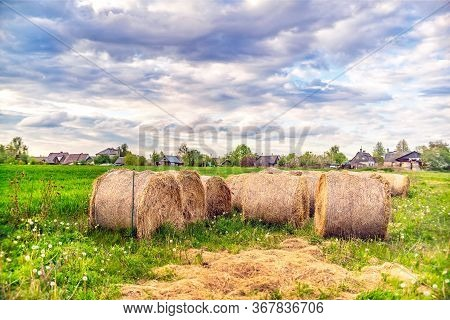 Panoramic View Of Spring Meadow With Hay Rolls On Cloudy Day In The Village. Lithuania.