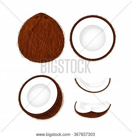 Coconut Brown Fruit And Half Cut Isolated On White, Illustration Coconut Brown Half Slice For Clip A