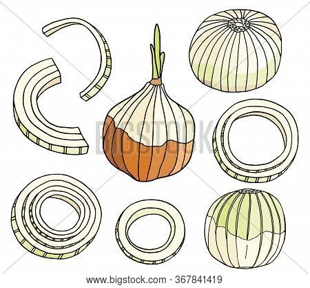 Outline Onion Vector Illustration Set. Hand Drawn Colored Bulb, Rings And Slices Of Onion. Fresh Ing
