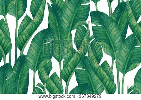 Fresh Green Banana Leaves On White Background. Tropical Greenery Seamless Pattern
