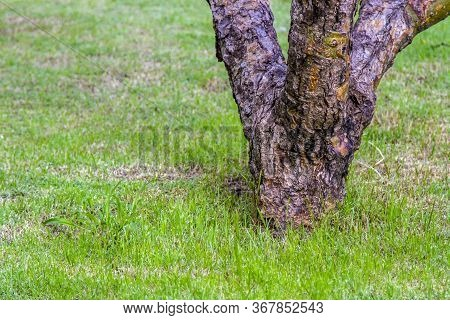 Stub Tree Dark Brown With Green Grass In The Garden Natural Style