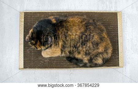 Used Cat Scratcher. Cat Cardboard Toy For Scratching And Playing. Close Up View. Three-colored Cat I