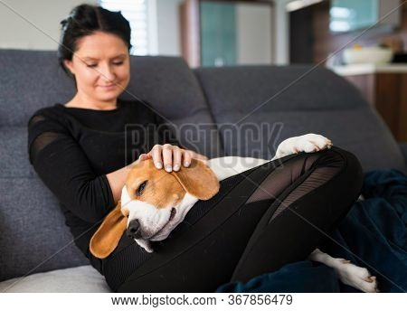 Young Woman Sitting On Sofa And Pet Her Beagle Dog In Bright Room.. Pets Care And Love Concept.