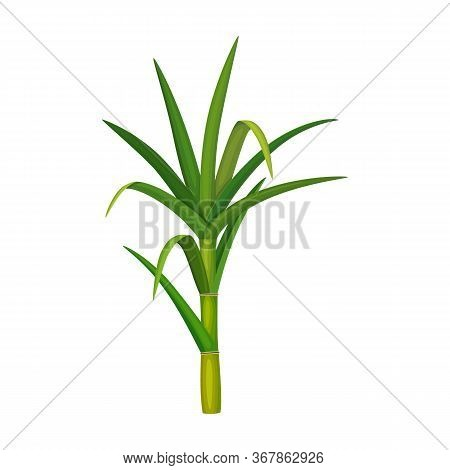 Leaf Sugar Cane Vector Icon.cartoon Vector Icon Isolated On White Background Leaf Sugar Cane.