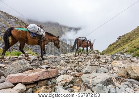 Salkantay Trekking In Peru, South America