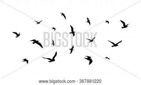 Flying Flock Of Birds. Flight Bird Silhouettes, Isolated Black Doves Or Seagulls Collection. Freedom