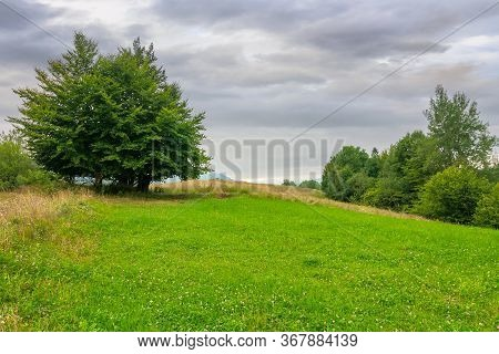 Tree On The Grassy Meadow In Countryside Landscape. Stormy Overcast Weather In Mountain. Beautiful N