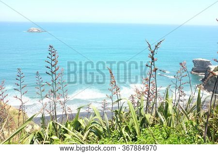 Photo Of The Plant, New Zealand Flax Or Phormium Tenax Also Known As Harakeke Or Swamp Flax, With St