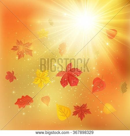 Beautiful Autumn Scenery Background. Autumn Air / Mood. Colorful Leaves Spinning In The Rays Of The