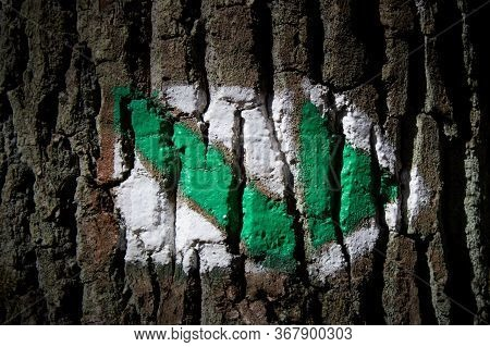 Hiking Sign On A Tree Trunk. A Sign That Lines A Hiking Trail. Green Tourist Sign. Signs That Determ