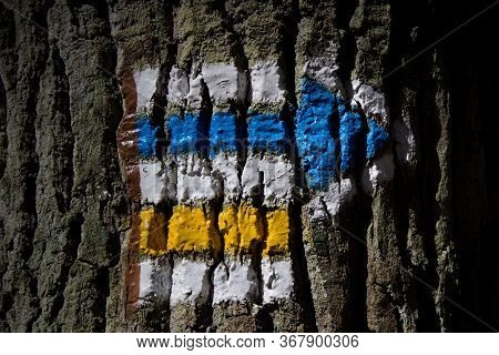 Hiking Sign On A Tree Trunk. A Sign That Lines A Hiking Trail.blue And Yellow Tourist Sign. Signs Th