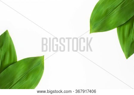 Green Tropical Leaves Isolated On White Background Top View With Copy Space. Floral Nature Flat Lay.
