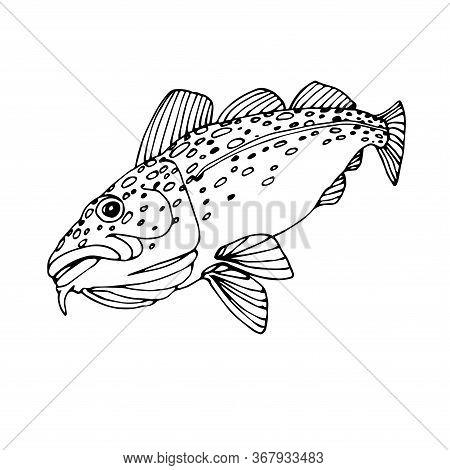 Atlantic Spotted Cod, Commercial Fish, Sea Predator, Delicious Food, Vector Illustration With Black