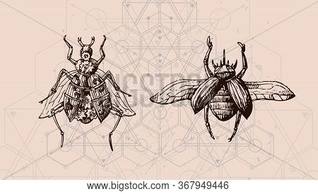 Bugs And Sacred Geometry. Hand Drawn Vector Illustration Could Be Used For Textile,  Yoga Mat, Phone