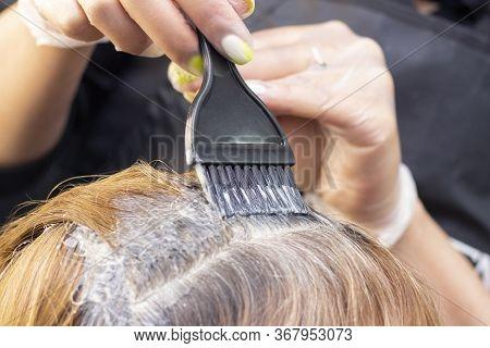 Gray Hair. Application Of Hair Dye To Regrown Gray Hair Roots. Beauty Salon