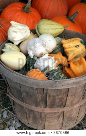 Fall Color In Variety Of Gourds And Pumpkins