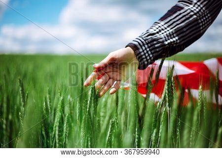 Womans Hand With An American Flag Touches Spikelets On The Green Wheat Field. Patriotic Holiday Cele