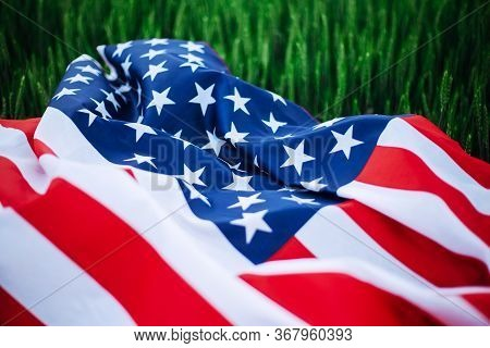 Usa American Flag Lays Casually On The Spikelets On The Green Wheat Field. Patriotic Holiday Celebra