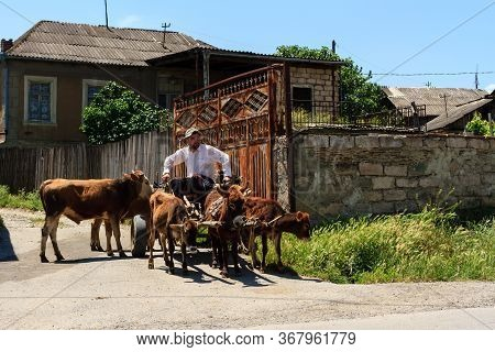 Gori, Georgia - June 14, 2016: Farmer Sitting On The Cart Pulled By Draught Animals.